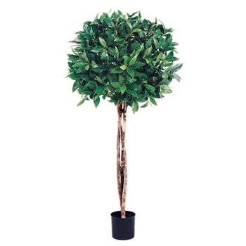 Bay Topiary Green Tree