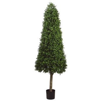 Boxwood Cone Green Topiary 6ft