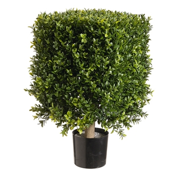 Boxwood Leaf Square Green Topiary 21in