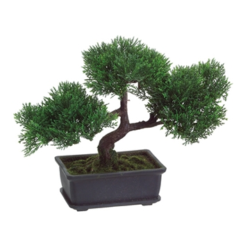 Cedar Bonsai Green Topiary 9in