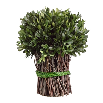 Boxwood Leaf Bunch (Preserved) 10in