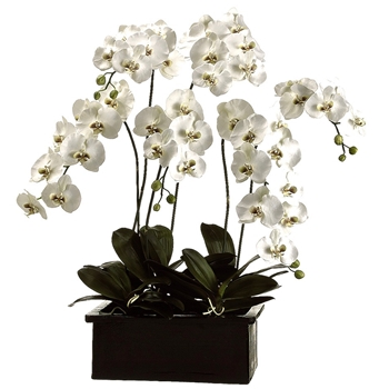 Phalaenopsis Orchid 42in
