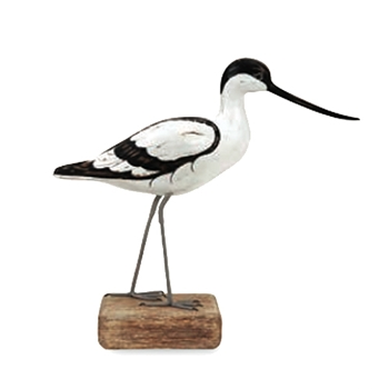 Avocet Walking 13in