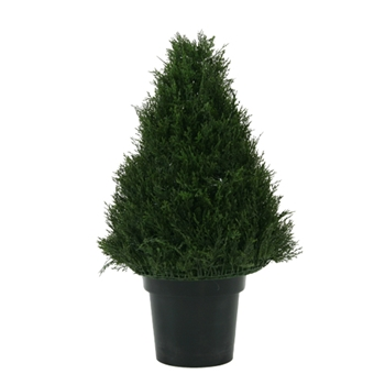 Cypress Ball Topiary 30in
