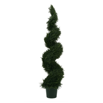 Cypress Spiral Tree 5ft