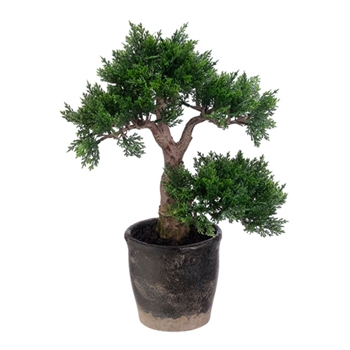 Bonsai Tree 11in