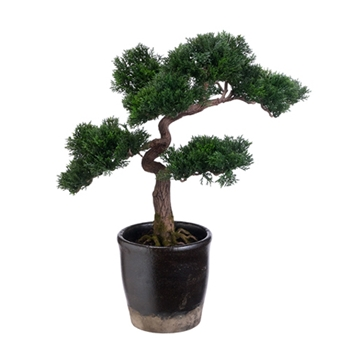 Bonsai Tree 19in