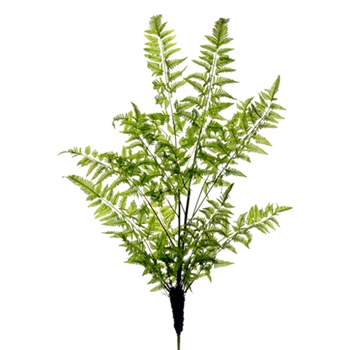 Forest Fern Plant 47in