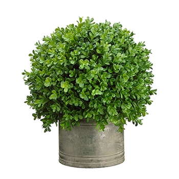 Boxwood Tin Topiary 16in
