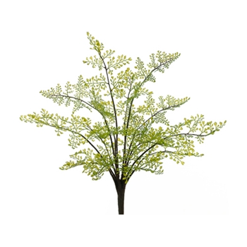 Maidenhair Fern 15in