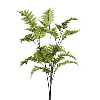 Forest Fern 42in