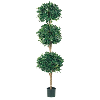 Bay Topiary Green Tree (3) 6ft