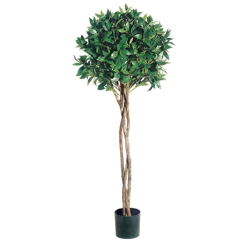 Bay Topiary Green Tree 4ft