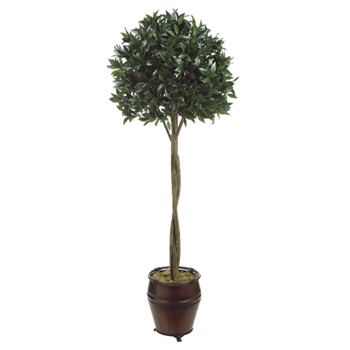 Bay Green Tree w/ Urn 6ft