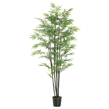 Black Bamboo 7 Stalk Tree 6ft