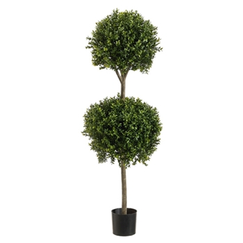Boxwood Green Topiary (2) 4ft