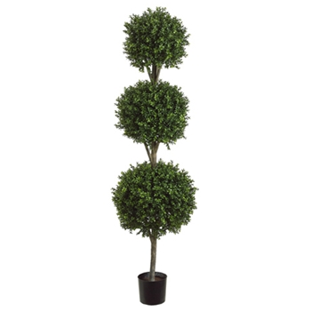 Boxwood Leaf Geen Topiary/3 Ball 6ft