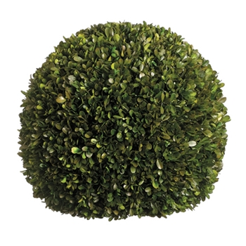 Boxwood Leaf Green Globe (Preserved) 17in