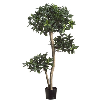 Japonicus Green Topiary/3 Ball 3ft