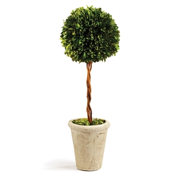 Boxwood Leaf Green Topiary/1 Ball (Preserved)