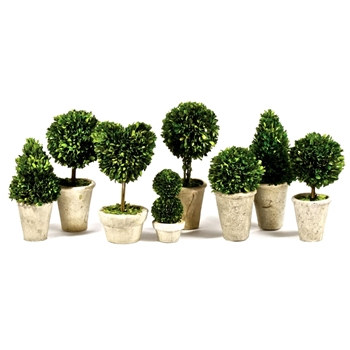 Boxwood Leaf Green Topiary Assorted (Preserved)