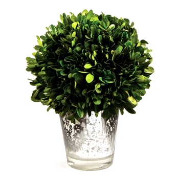 Boxwood Leaf Green Topiary (Preserved) 8in