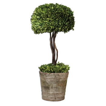 Boxwood Leaf Green Topiary (Preserved) 34in