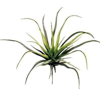 Tillandsia Natural Succulent