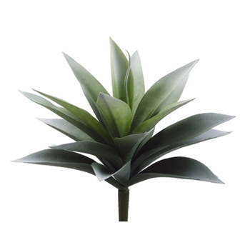 Agave Frost Green Natural Succulent