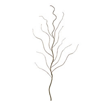 Curly Willow Branch