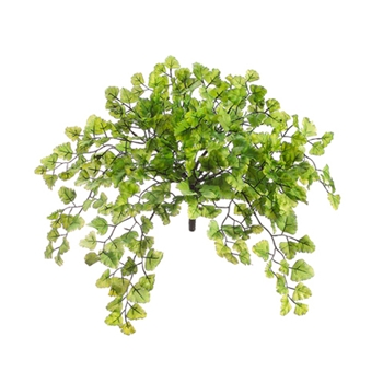 Maidenhair Green Fern 15in