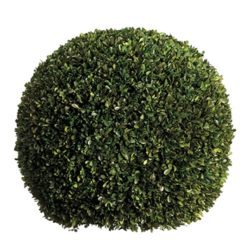 Boxwood Leaf Globe (Preserved) 23in