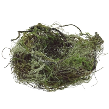 Lichen Bird Nest 7in