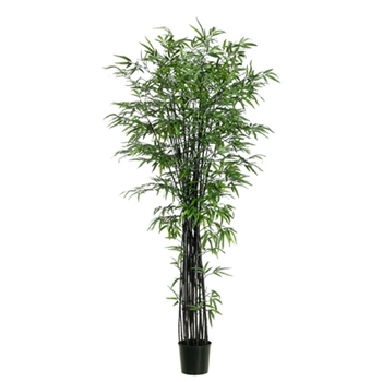 Bamboo (Black) Tree 7ft