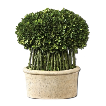 Boxwood Topiary 15in