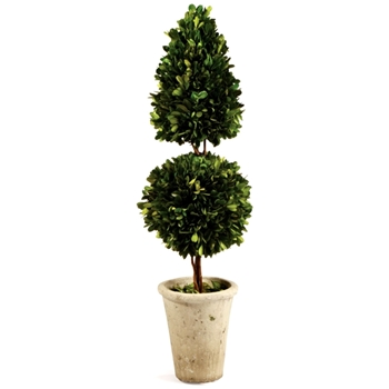 Boxwood Topiary 25in