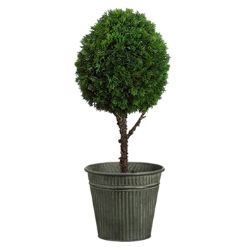 Cedar Ball Topiary 26in