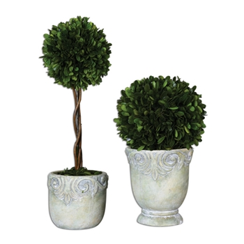Boxwood Topiary (Preserved) 11in/8in