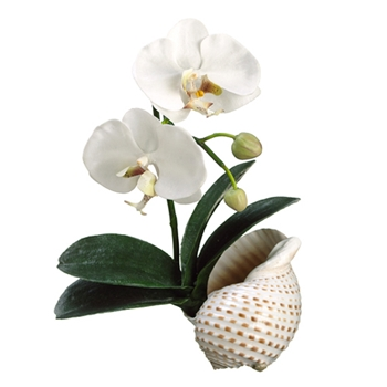 Phalaenopsis Orchid (Shell) 14in