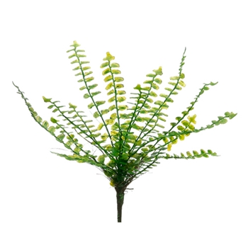 Button Fern 10in