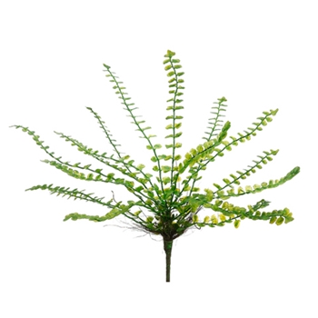 Button Fern 13in