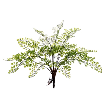 Maidenhair Fern 14in