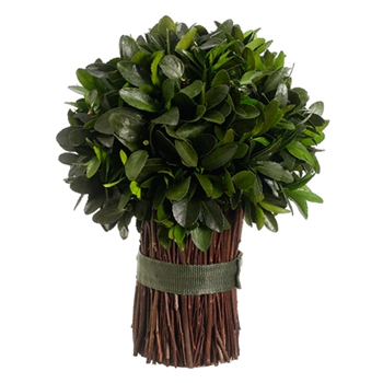 Tea Leaf Topiary (Preservered) 13in