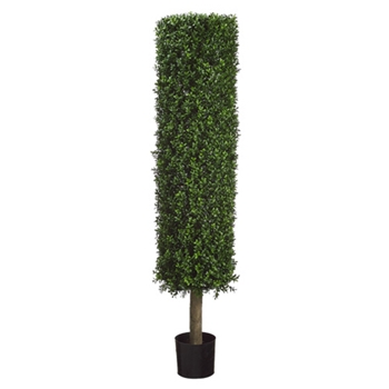 Boxwood Tube Topiary 4.5ft