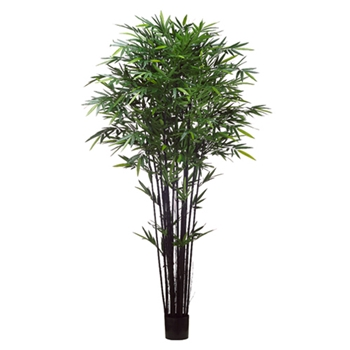 Bamboo Tree 8ft