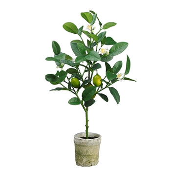 Lime Fruit Topiary 22in