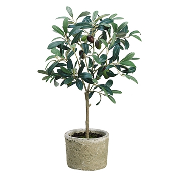 Olive Tree Potted 19in