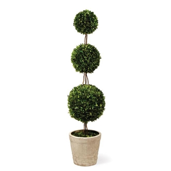 Boxwood Topiary (Preserved) 59in