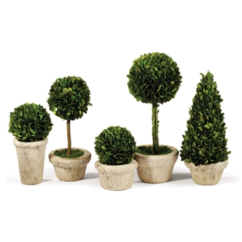 Boxwood Topiary (Preserved) Mini