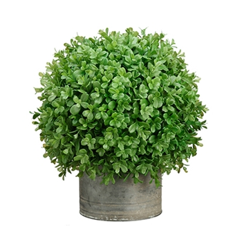 Boxwood Tin Topiary 14in
